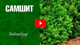 видео Все о живых изгородях. Растения для живой изгороди