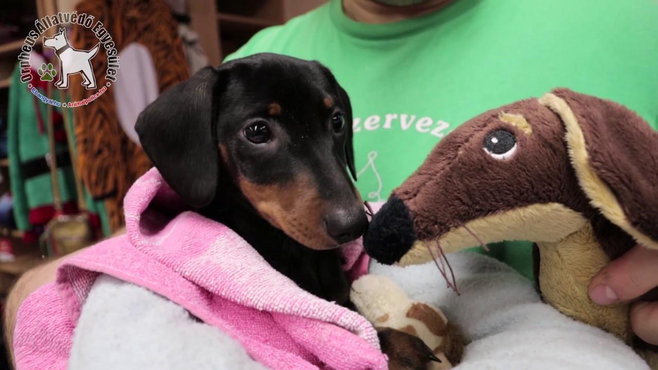 81316db4c3 Karácsonyra állatstop - videóval · Állatvédő Egyesület