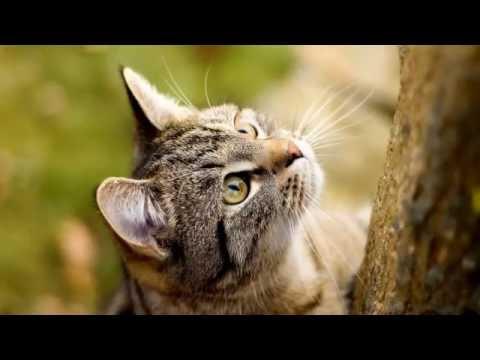 Chú mèo con - Xuân Mai