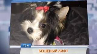 В Перми «бешеный» лифт свернул голову собаке