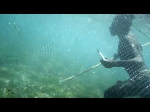 2013-01-11 Spear fishing in Papua New Guinea