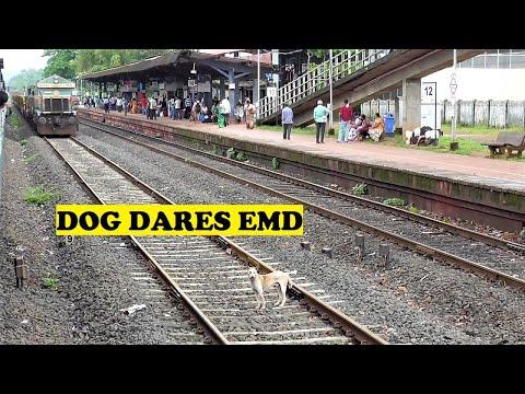 EMD Freight Poms Daring Confident Doggy   Kankavali