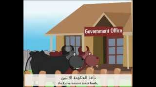 You have two cows  لديك بقرتان