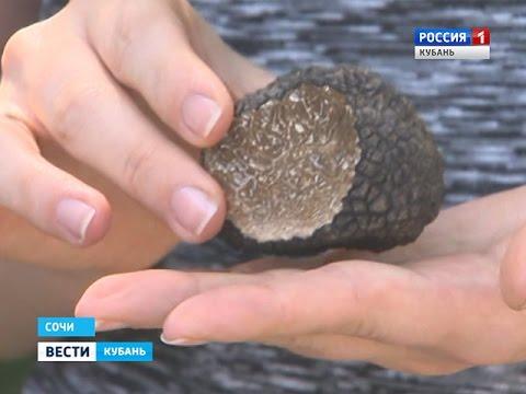 Сочинка нашла один из самых дорогих грибов в мире – трюфель