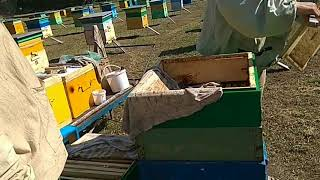 Первая качка мёда 🍯