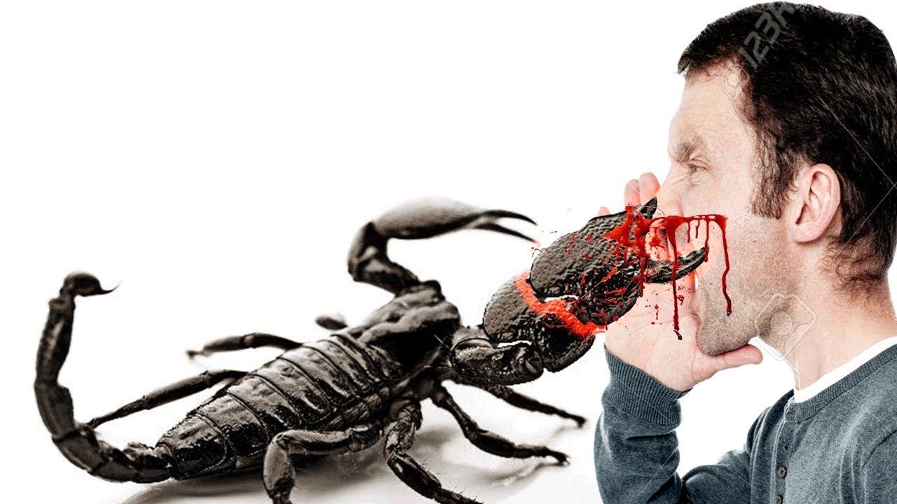 Top 5 Deadliest and Venomous Scorpions in The World | Doovi |Worlds Most Venomous Scorpion