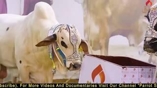 Khalq Cattle Farm I 2018 I Maweshi Mandi I Opening I Documentary I Pakistan I Parrot Studio