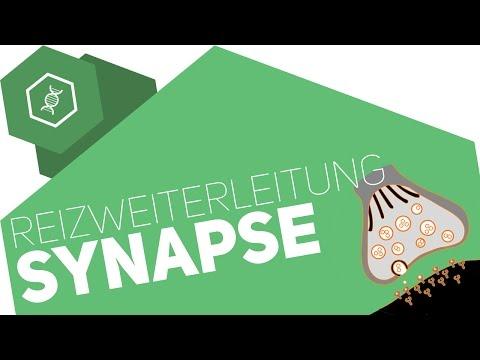 Synapse - Reizübertragung ● Gehe auf SIMPLECLUB.DE/GO & werde #EinserSchüler
