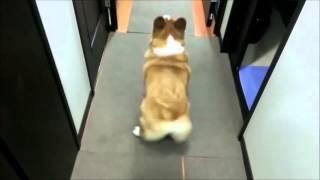 Repeat youtube video dog twerking bubble butt 10 mins