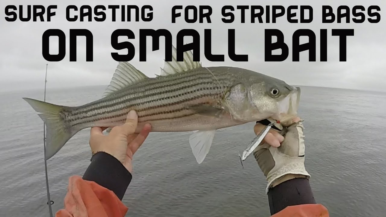 Surf Casting for Striped Bass on Small Bait. Montauk NY ...