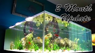 Plywood Aquarium, Clear Water