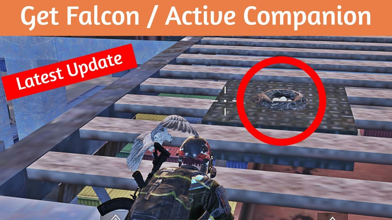 Download NEW UPDATE!! How To Get Falcon/Companion | PUBG MOBILE