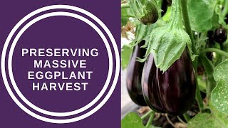 Preserving our massive Eggplant Harvest