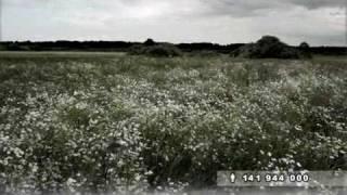 Смотреть клип Игорь Растеряев - Ромашки