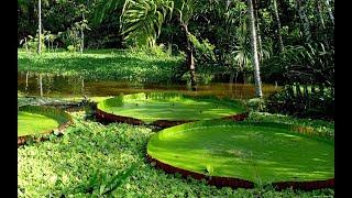 Амазонка - величие и непокорность. Документальный фильм