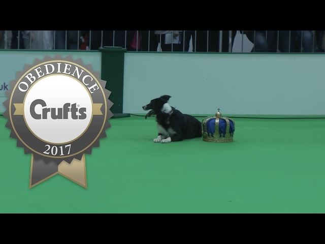 Obedience Championship - Dogs - Part 8 | Crufts 2017