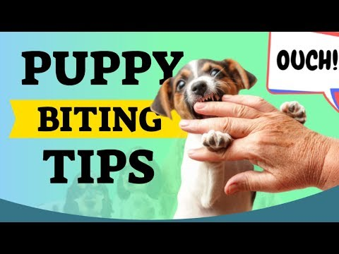 Puppy Biting Tips For New Puppy Owners