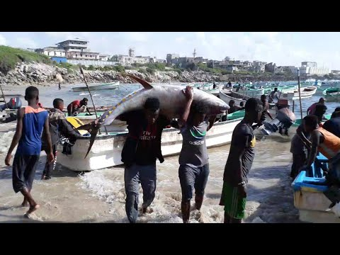 Som Fishing port
