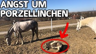 ANGST UM PORZELLINCHEN ✮ Bangen um mein kleines Pony ...