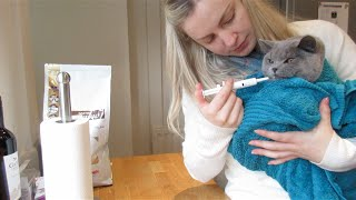 KITTENS ARE SICK WITH DIARRHOEA :( | CHRIS & EVE