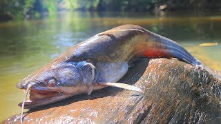Yummy Curry Big Fish Recipe on River in forest