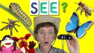 What Do You See? Song | Bugs and Insects | Learn English Kids