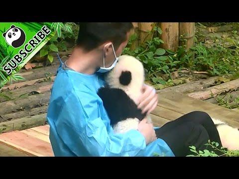 Nanny cuddles adorable baby panda.
