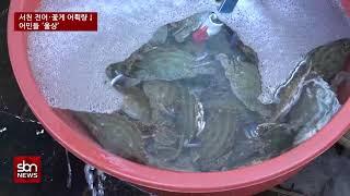 [sbn] 냉탕·온탕 오가는 제철 전어·꽃게잡이…서천 …