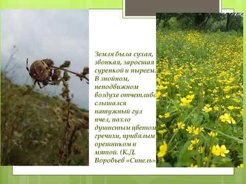 Воробьев К.Д.