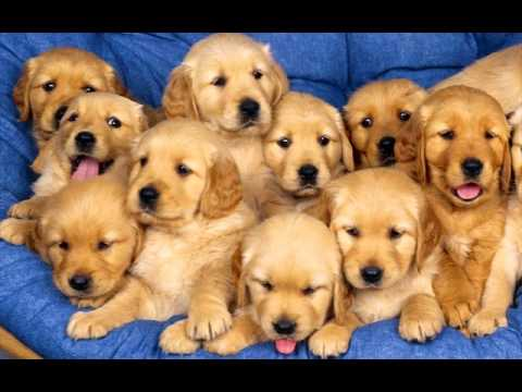 cute puppies compilation new wallpaper youtube