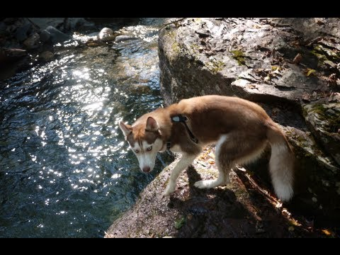 SWIMMING HOLE HUSKY!