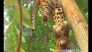 News Highlights 09/05/15 Leopard spreads fear and more