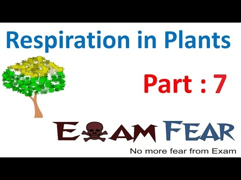 Biology Respiration in Plants part 7 (Glycolysis : Step 7 to 10) CBSE class 11 XI