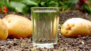 Рецепт самогона из картофеля, два вида браги