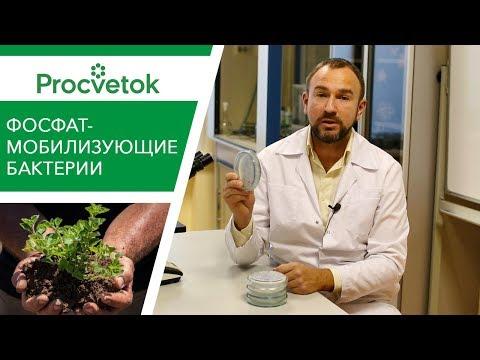Вопрос: Как недостаток бора влияет на растения?