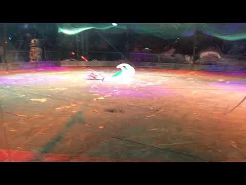 Mechatrons Robots Of Destruction Dublin 2018: Featherweight Rumble 2