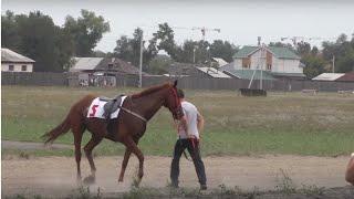 Аламан-Байга Абакан 2015 (Лошади-Horse–Animal-racing-конь-смотреть-онлайн-скачки)