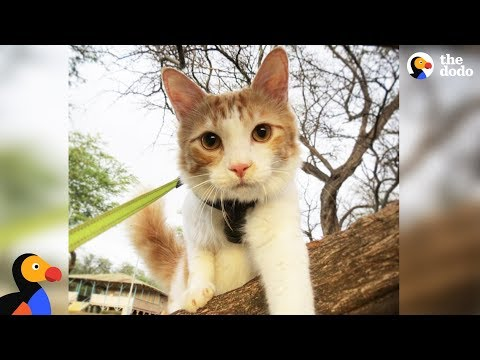 Adventure Cat Prepares For His Biggest Challenge  A Foster Kitten | The Dodo
