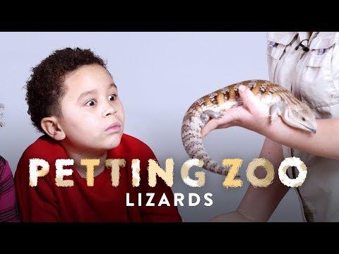 Lizards | Petting Zoo | HiHo Kids
