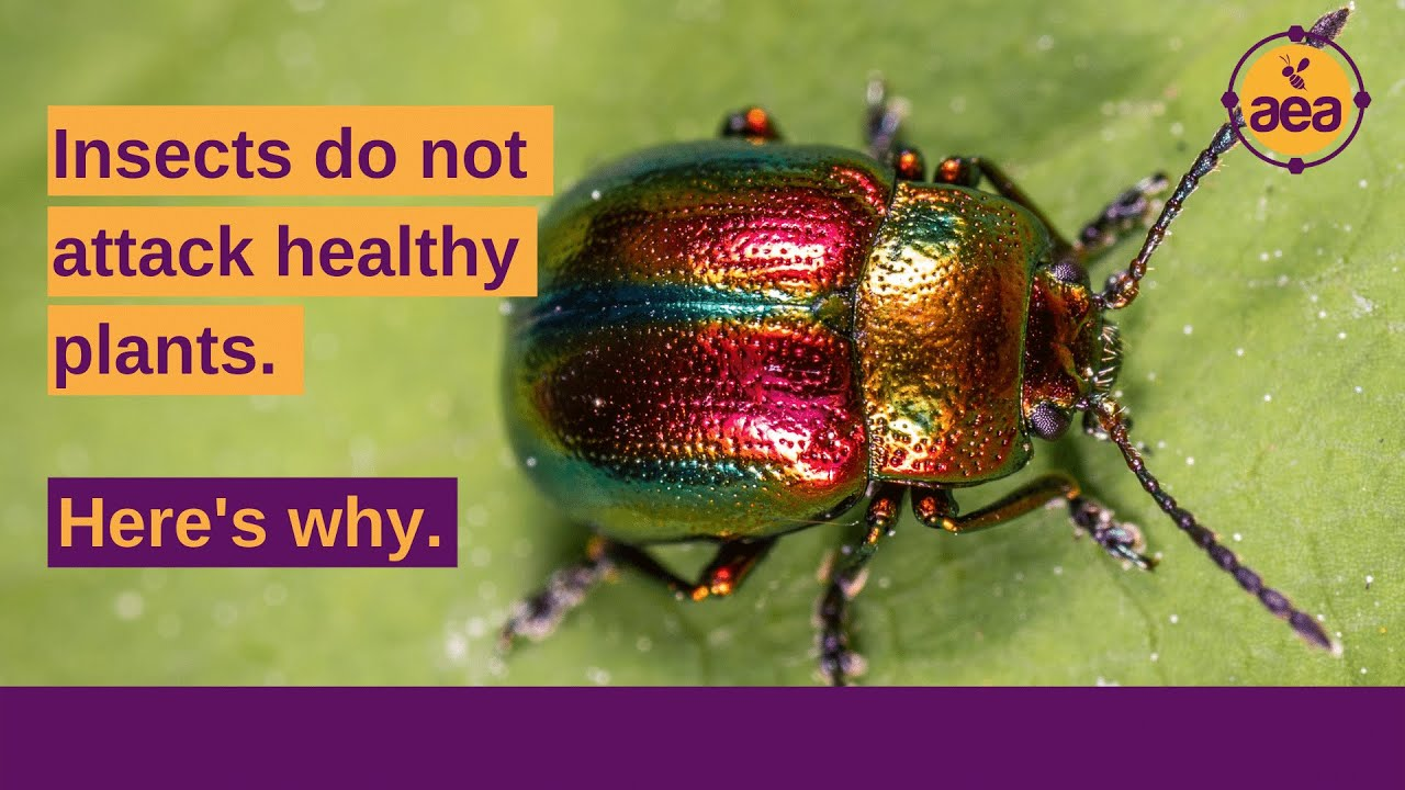 Insects do not/cannot attack Healthy Plants | Dr. Thomas Dykstra | Regen Ag - 25 Aug 2021