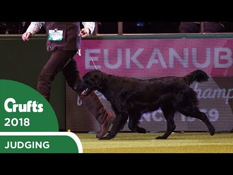 Gamekeepers Competition | Crufts 2018