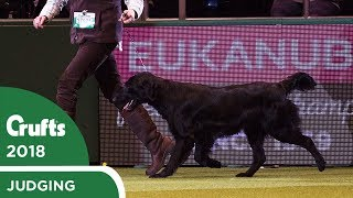 gamekeepers-competition-crufts-2018