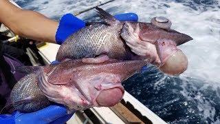【都市伝説】ゴブリンシャークの孫?釣れたての人面深海魚の味はいかに?