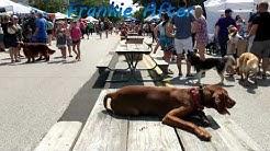 Best Dog Training Cleveland, Ohio!