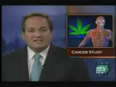 Cancer Curing Cannabis Oil: How Much MARIJUANA Should I Ingest?