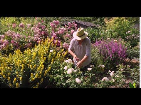 comment tailler un rosier remontant en t jardinerie. Black Bedroom Furniture Sets. Home Design Ideas