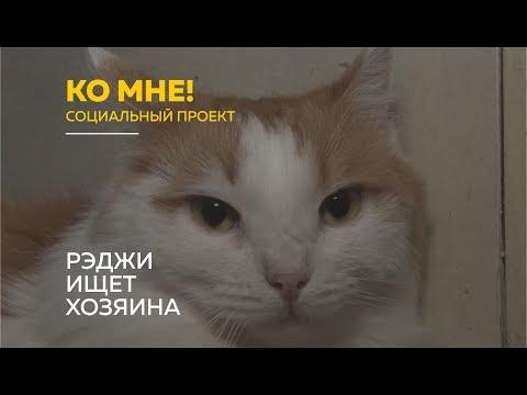 «Ко мне!»: как избежать стресса и адаптировать котов к новому дому