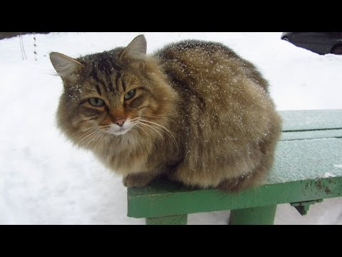 New cute cat on the bench during a snowfall