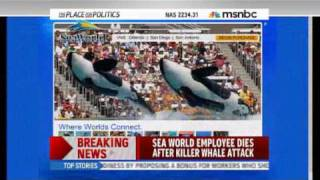 !!TRAINER (WOMAN) KILLED BY ORCA  (KILLER WHALE) AT SEA-WORLD!! 2/24/2010