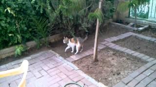 הכלבה משתינה והחתולה מכסה